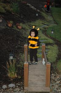 Bumble_Bee_on_Bridge.jpg