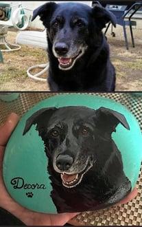 Joeys dog 13 A