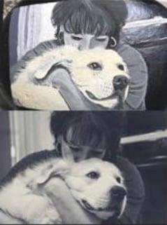 Joeys dog 16 A