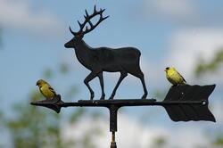 The_Gold_Finches_are_back.__Washington_State_Bird.jpg