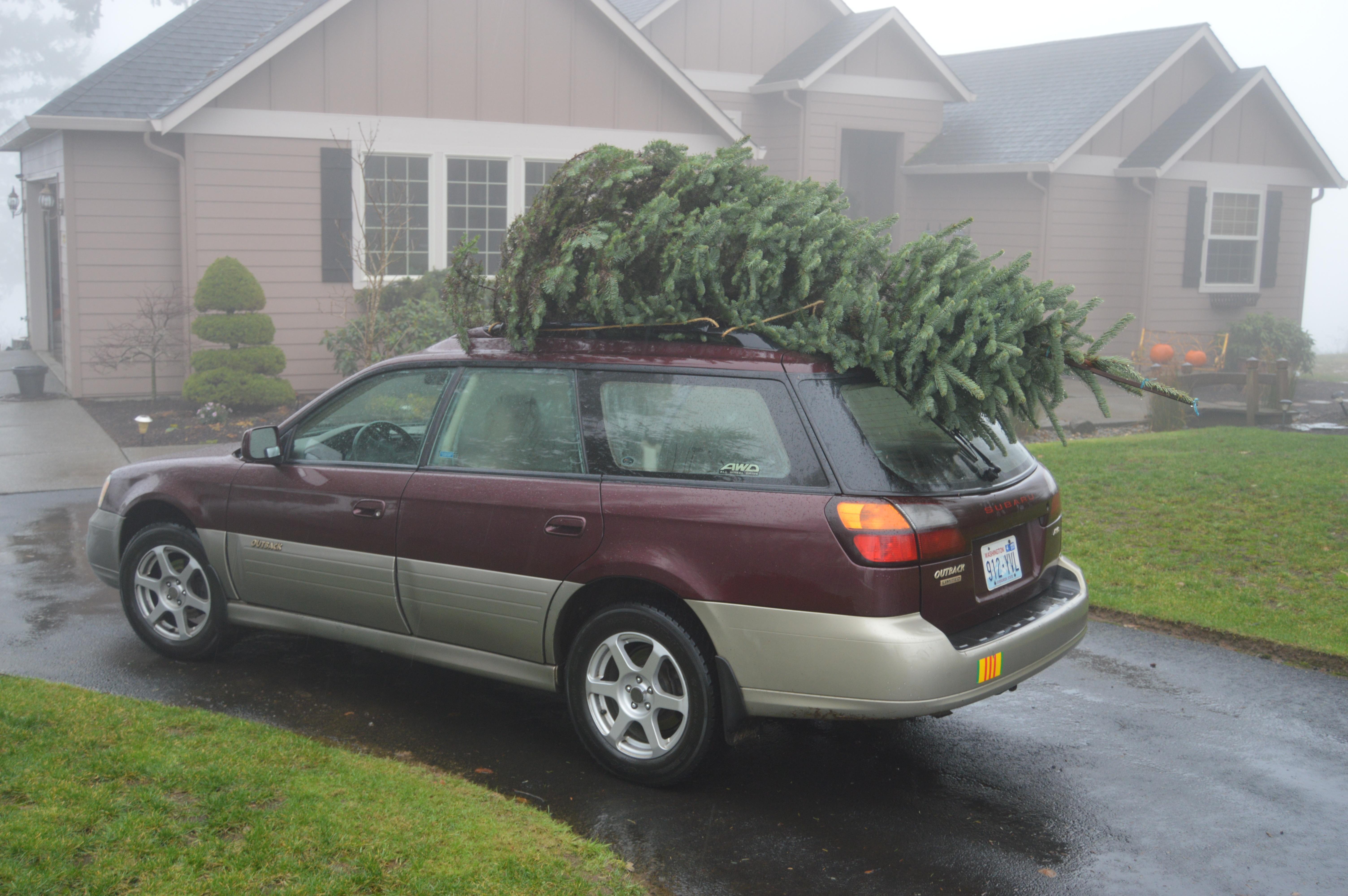 tree on car-1.jpg
